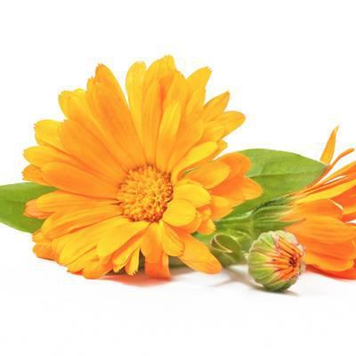 Farbenrausch in Orange