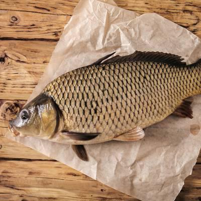 Frisch aus See & Fluss