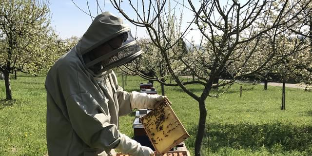 Cultivating a Fascination with Bees