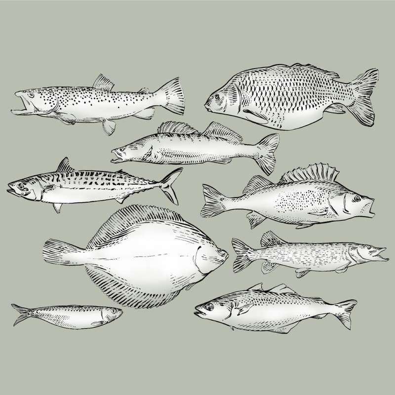 The marine ecosystem