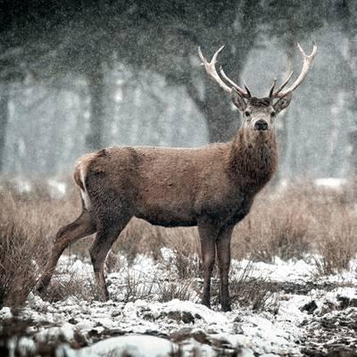Kraut und Ruam im Winter