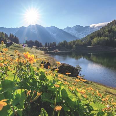 Von stillen Seen und Silberknappen