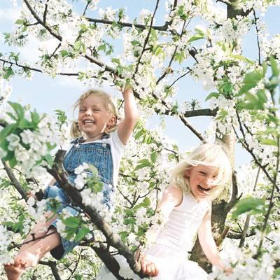 APPin den Frühling!