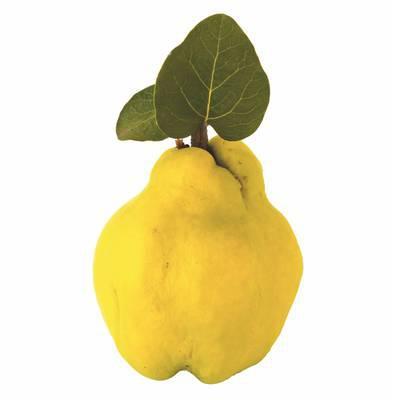 Die Frucht der Liebesgöttin