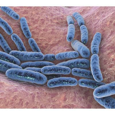 Probioatika bei einer infektiösen Diarrhoe